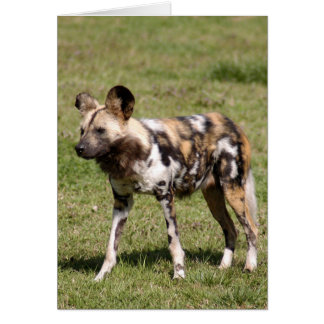 african-wild-dog-016 greeting card