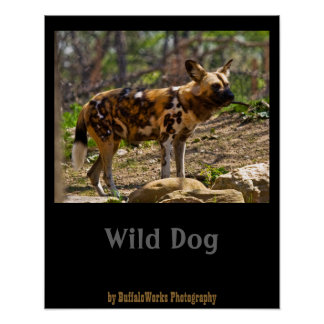 African Wild Dog  1932 Posters