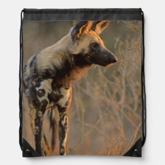 African Wild Dog (Lycaon Pictus), Kruger Drawstring Bag