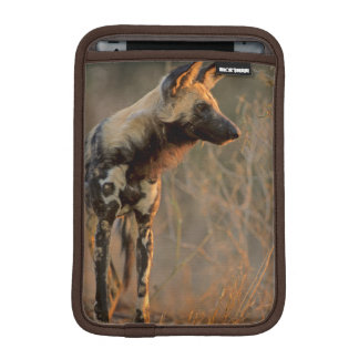 African Wild Dog (Lycaon Pictus), Kruger iPad Mini Sleeve
