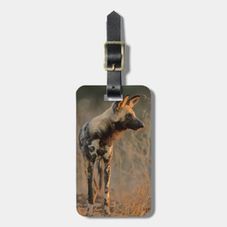 African Wild Dog (Lycaon Pictus), Kruger Luggage Tag