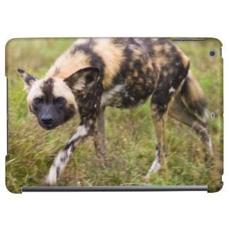 African Wild Dog (Lycaon Pictus), Madikwe Game iPad Air Cover