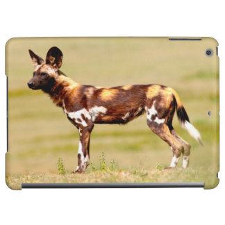 African Wild Dog (Lycaon Pictus) Standing