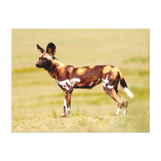African Wild Dog (Lycaon Pictus) Standing Canvas Print
