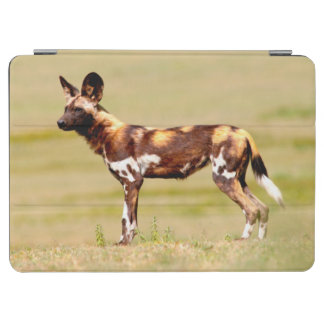 African Wild Dog (Lycaon Pictus) Standing iPad Air Cover