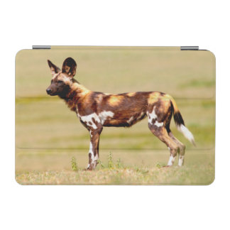 African Wild Dog (Lycaon Pictus) Standing iPad Mini Cover
