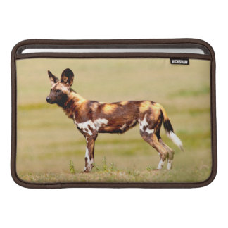 African Wild Dog (Lycaon Pictus) Standing MacBook Sleeve