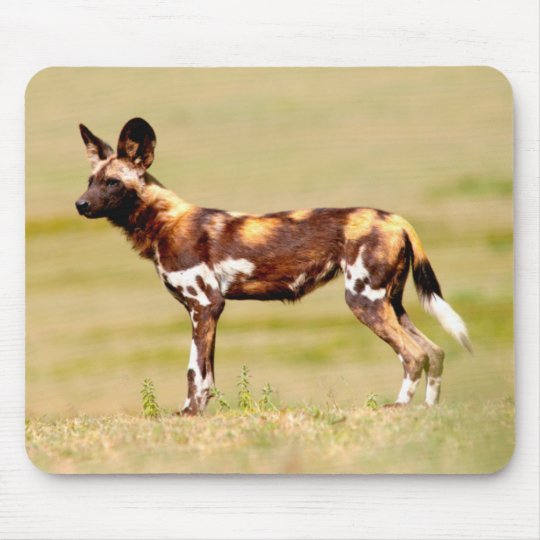 African Wild Dog (Lycaon Pictus) Standing Mouse Mat