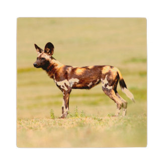 African Wild Dog (Lycaon Pictus) Standing Wood Coaster