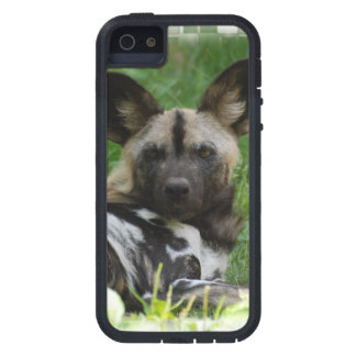African Wild Dogs iPhone 5 Case