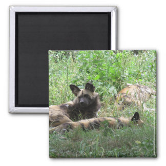 African Wild Dogs Magnet
