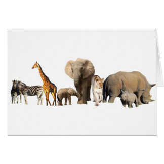 African Wildlife Card