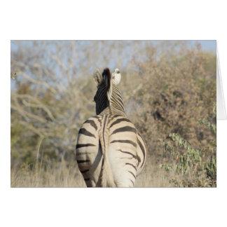 African zebra note card. card