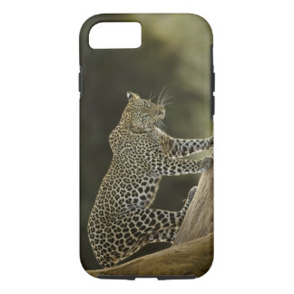 Afrikanischer Leopard, Panthera pardus, in einem B iPhone 7 Case