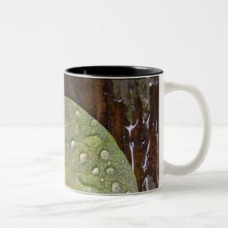 After rain Two-Tone mug