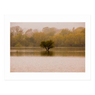 After the Flood Postcard