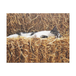 Afternoon Cat Nap Canvas Print