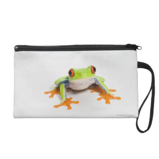 Agalychnis callidryas on white background wristlet