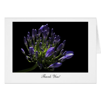 Agapanthus, African Lily - Thank You Greeting Card
