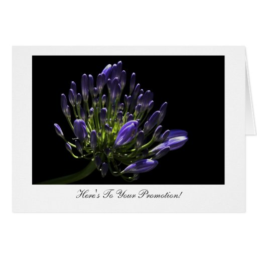 Agapanthus - Congratulations on Your Promotion Greeting Card