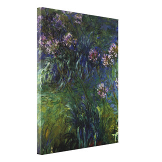 Agapanthus Gallery Wrapped Canvas