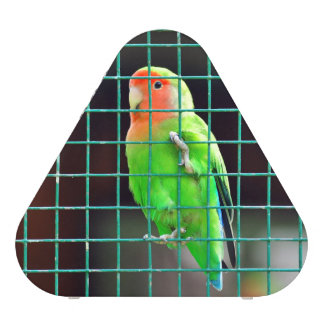 Agapornis Lovebird green bird colored small parrot