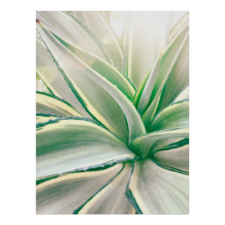 Agave beauty poster