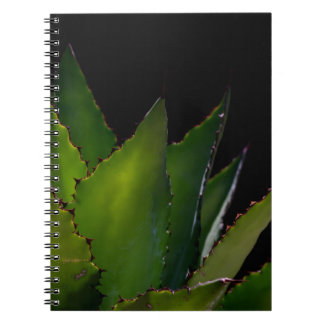 Agave glow spiral note books