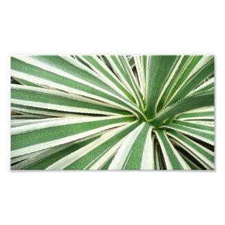 Agave Plant Photo Print
