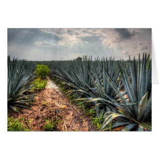 Agave Tequilana Card