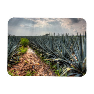 Agave Tequilana Rectangular Photo Magnet