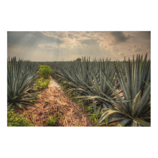 Agave Tequilana Wood Prints