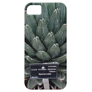 Agave Victoria Photo iPhone SE + iPhone 5/5S iPhone 5 Cases
