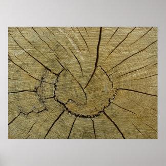 Aged Wood Stump Poster