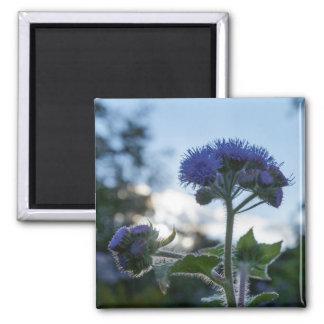 Ageratum Floss Flower Floral Square Magnet