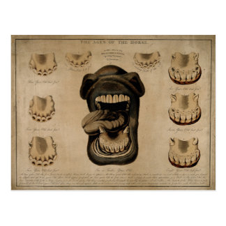 Ages of The Horse Mouth Teeth Etching Watercolor Postcard
