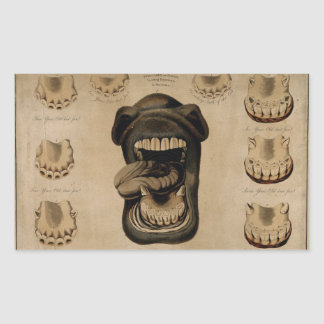 Ages of The Horse Mouth Teeth Etching Watercolor Rectangular Sticker