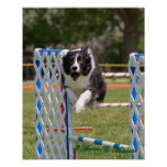 Agility Border Collie Print