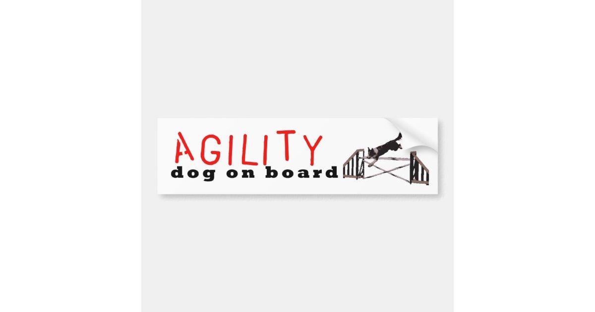 agility dog on board