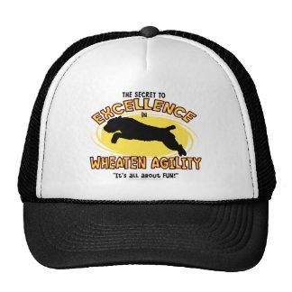 Agility Wheaten Terrier Secret Hat