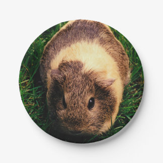 Agouti Guinea Pig in the Grass 7 Inch Paper Plate