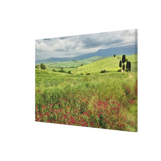 Agricultural field, Tuscany region of Italy. Canvas Print