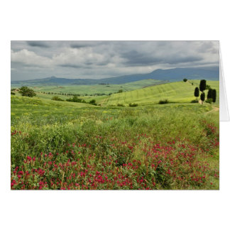 Agricultural field, Tuscany region of Italy. Card