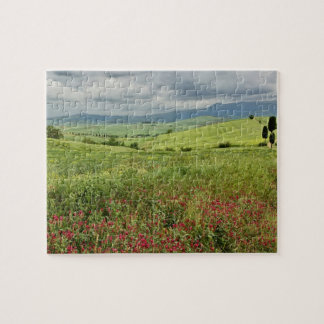 Agricultural field, Tuscany region of Italy. Jigsaw Puzzle