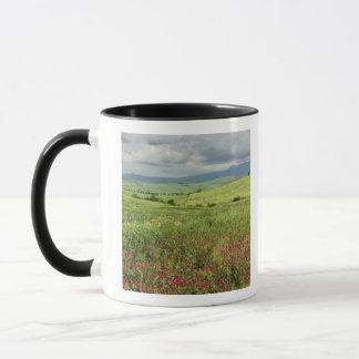 Agricultural field, Tuscany region of Italy. Mug