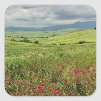 Agricultural field, Tuscany region of Italy. Square Sticker