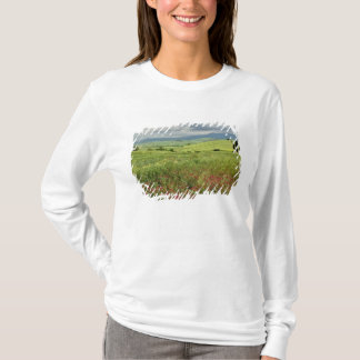 Agricultural field, Tuscany region of Italy. T-Shirt