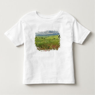 Agricultural field, Tuscany region of Italy. Tee Shirts