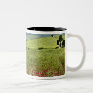 Agricultural field, Tuscany region of Italy. Two-Tone Coffee Mug