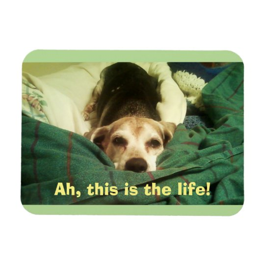 """Ah, This Is the Life!"" Beagle 3x4 Fridge Magnet"